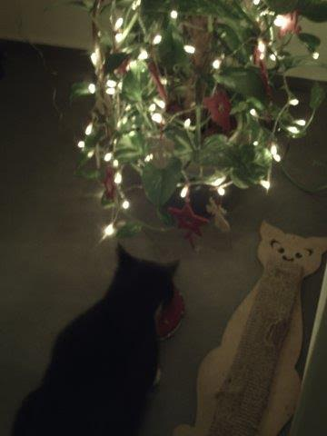 Django beim Weihnachtsmahl, ger. Makrele